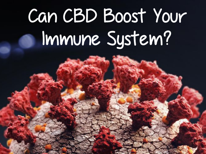 Can CBD Boost Your Immune System?